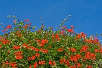 Planten volle zon balkon