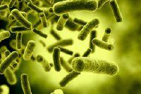 Bacteriën in de natuur - wat betekent