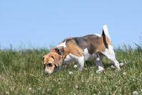 Hond beeft inademing - Nuttig