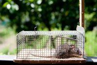 Up muizenval - dus geen muis meer lopen rond in uw kelder