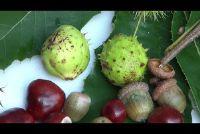 Herfst tafeldecoratie - dus je versieren met bladeren en fruit