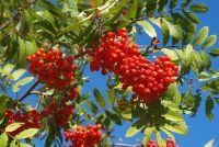 Delicious wilde vruchten - recepten voor uw genot