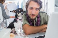 Houd mini Chihuahua Puppy - het moeten er rekening mee