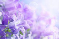 Taken bloeien