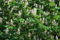 Flachwurzelnde bomen - Wat u zou moeten overwegen het planten