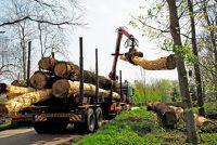 Kubieke meter hout - een korte uitleg