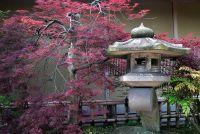 Japanse tuinen - deze planten mag niet worden gemist