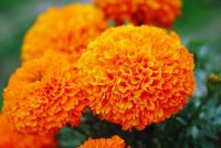 Bloemen trekken studenten zelf - hoe het werkt