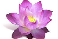 Lotus flower - Begrip
