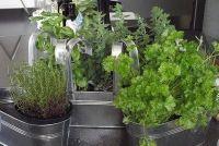 Herb decoratie - de 11 beste DIY Ideeën
