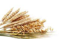 Green Core: Ingrediënten - nuttige informatie voor granen