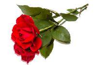 Hoeveel kost een roos?  Schatting prijzen voor online bestellen -