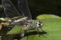 Het creëren van natuurlijke vijver - dus plan uw biotoop