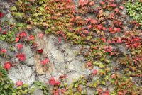 Beschaamd Mauerabdeckplatten beton - hoe het werkt