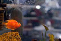 Cilinder Aquarium vullen humane