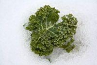 Het planten van de winter groenten - dus het zal werken in de kas