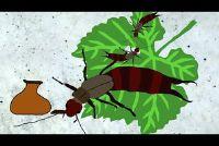 Zijn oorwormen gevaarlijk voor de mens?  - Meer informatie over het dier Ontdek