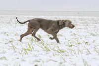 Slenteren in de hond - Oorzaken