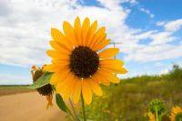 """""""Wat kan worden geplant in augustus?""""  - Aanwijzingen voor Landscaping"""
