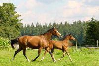 Een paard draf