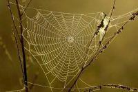 Wat te spinnen eten?  - Meer informatie over voedsel en vangen weg Ontdek
