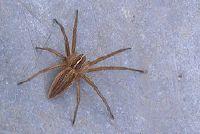 Hoeveel soorten spinnen zijn er wereldwijd?  - Overzicht