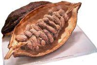 Eenvoudig uitgelegd structuur van de cacaoboon