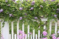 Planten privacy in de tuin - hoe het werkt met klimplanten