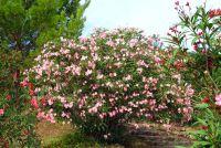 Kweek planten voor de tuin in de Italiaanse stijl