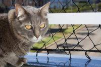 Bevestig kat net op het balkon zonder boren