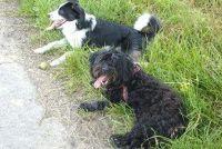 Behandel gele vlekken goed - hond urine op het gras