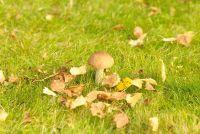 Mushroom tijd - dus je overvloedige oogsten
