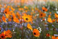 Tuin makkelijk te maken - zodat je een hoop tijd en moeite besparen