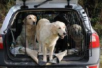 Alternatief voor hond kratten - Mededelingen