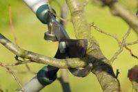 Aanwijzingen voor het snoeien van bomen
