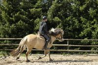 Pony en paard spelletjes - organiseer je een leuke toernooi