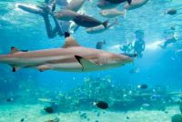 Haaien in Turkije - u moet weten