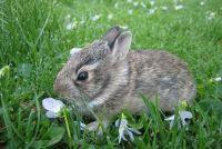 Het konijn stierf - dus je kunt het begraven