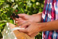 Voedsel uit het bos - dus te vinden en verzamel smakelijke vruchten van het bos