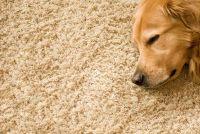 Verwijder melk vlekken op het tapijt - dus het zal werken