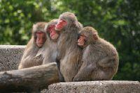 Slaap bij apen?