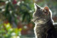 Cats mijten - dus traktatie oormijt met huismiddeltjes
