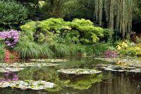 Huis remedie tegen algen in de tuinvijver