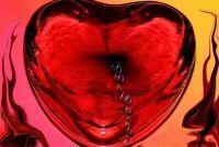 Bloed in het lichaam - dat doet de circulatie