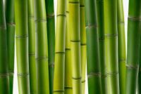 Verwijder bamboewortels