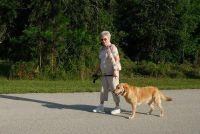 Hond heeft artritis - dus je kan hem helpen