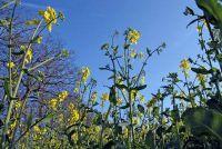 Bouw van een plant - wetenswaardigheden