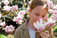 Snijd magnoliaboom - zodat je het goed doen