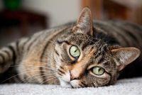 Kat heeft vlooien - zo schoon dat het appartement