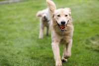 Ontmoeting met een hond - details over het gedrag van volwassenen en kinderen